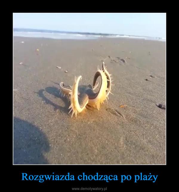 Rozgwiazda chodząca po plaży –