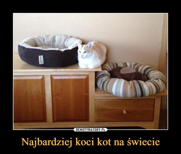 Najbardziej koci kot na świecie –