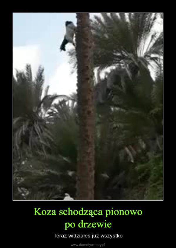 Koza schodząca pionowopo drzewie – Teraz widziałeś już wszystko
