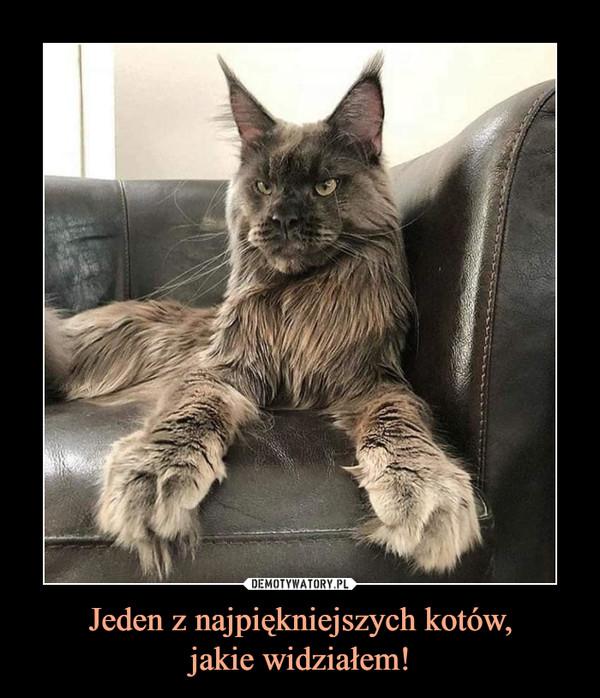 Jeden z najpiękniejszych kotów,jakie widziałem! –