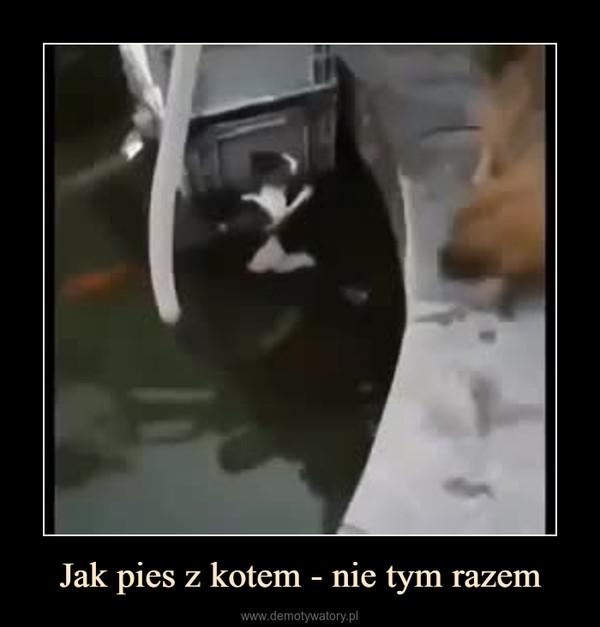 Jak pies z kotem - nie tym razem –