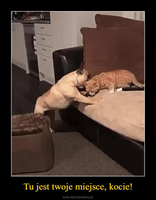 Tu jest twoje miejsce, kocie! –
