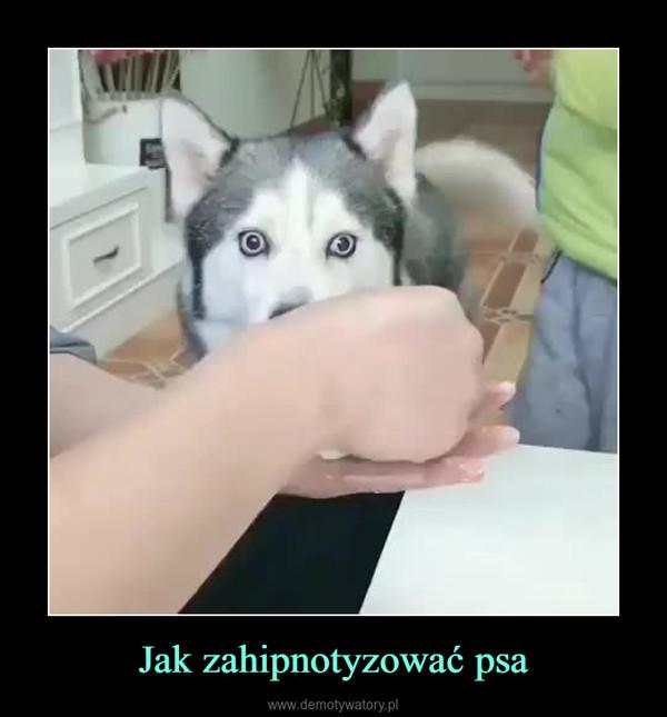Jak zahipnotyzować psa –