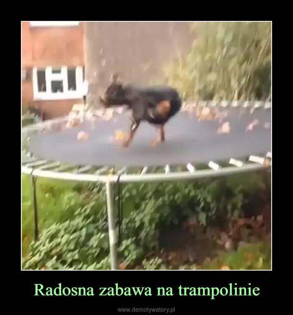 Radosna zabawa na trampolinie –