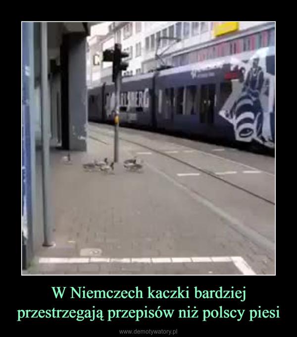 W Niemczech kaczki bardziej przestrzegają przepisów niż polscy piesi –