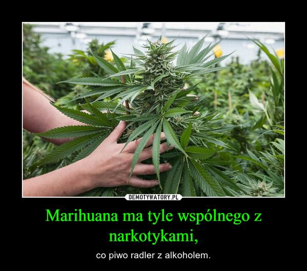 Marihuana ma tyle wspólnego z narkotykami, – co piwo radler z alkoholem.