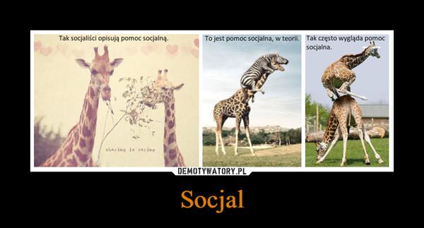 Socjal –