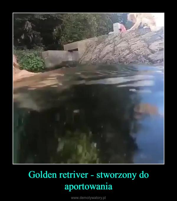 Golden retriver - stworzony do aportowania –