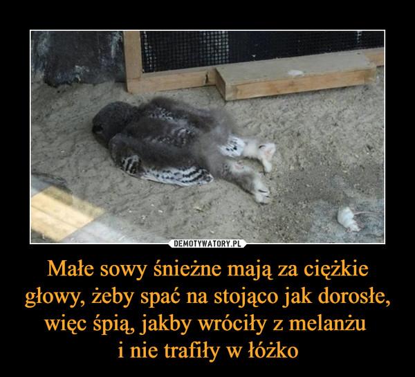 Małe sowy śnieżne mają za ciężkie głowy, żeby spać na stojąco jak dorosłe, więc śpią, jakby wróciły z melanżu i nie trafiły w łóżko –