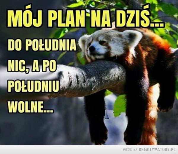 Plan na dziś –