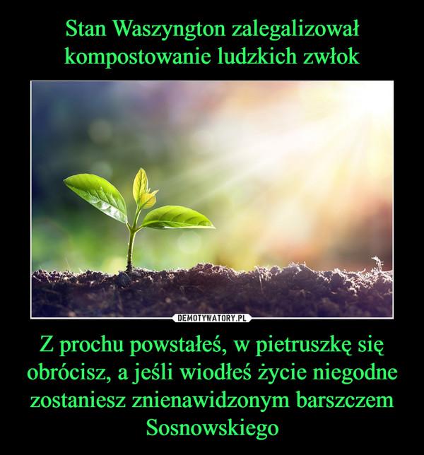 Z prochu powstałeś, w pietruszkę się obrócisz, a jeśli wiodłeś życie niegodne zostaniesz znienawidzonym barszczem Sosnowskiego –