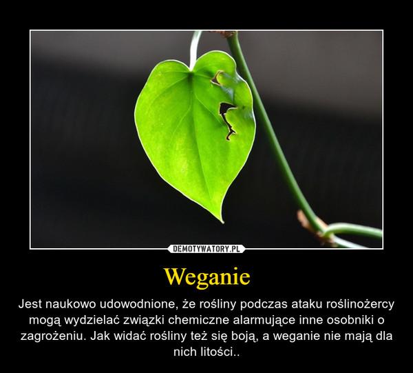 Weganie – Jest naukowo udowodnione, że rośliny podczas ataku roślinożercy mogą wydzielać związki chemiczne alarmujące inne osobniki o zagrożeniu. Jak widać rośliny też się boją, a weganie nie mają dla nich litości..