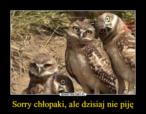 Sorry chłopaki, ale dzisiaj nie piję –