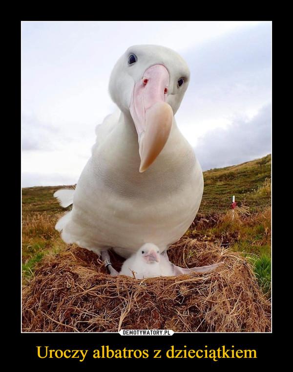 Uroczy albatros z dzieciątkiem –