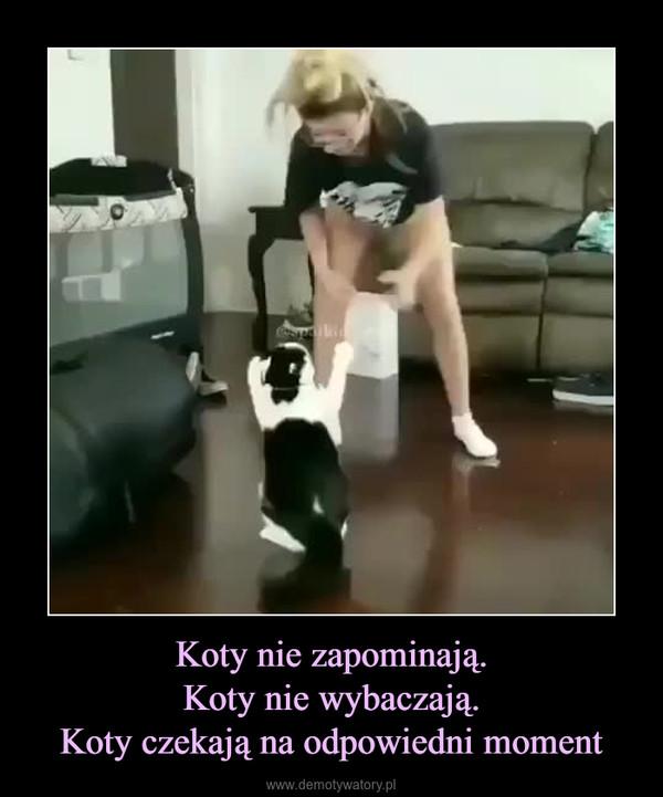 Koty nie zapominają.Koty nie wybaczają.Koty czekają na odpowiedni moment –