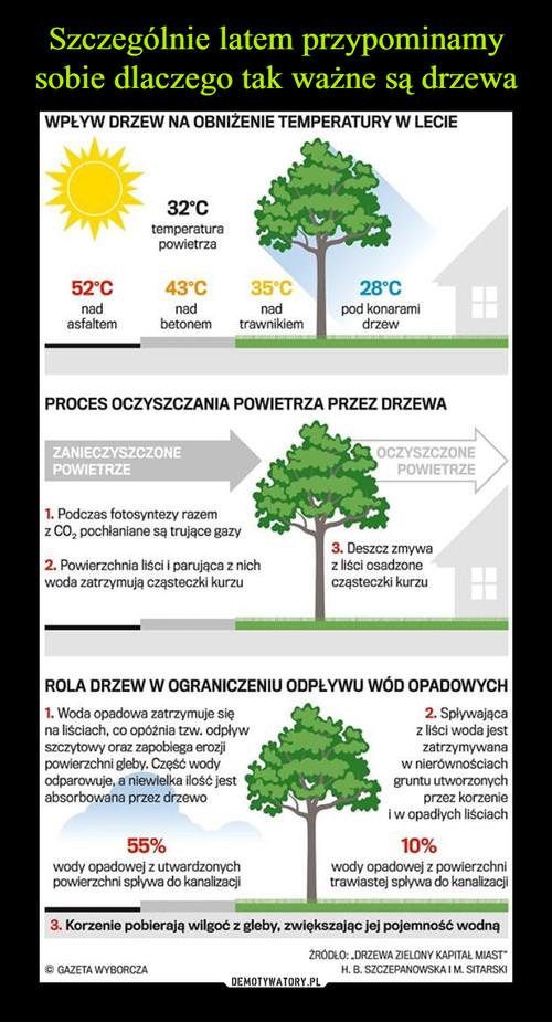 Szczególnie latem przypominamy sobie dlaczego tak ważne są drzewa
