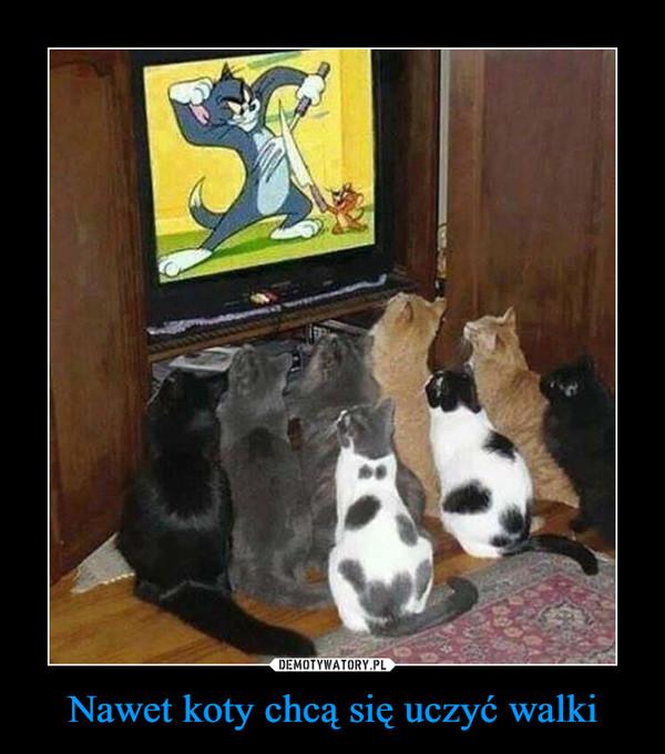 Nawet koty chcą się uczyć walki –