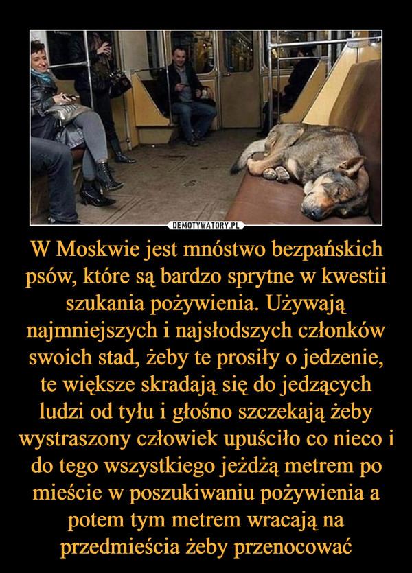 W Moskwie jest mnóstwo bezpańskich psów, które są bardzo sprytne w kwestii szukania pożywienia. Używają najmniejszych i najsłodszych członków swoich stad, żeby te prosiły o jedzenie, te większe skradają się do jedzących ludzi od tyłu i głośno szczekają żeby wystraszony człowiek upuściło co nieco i do tego wszystkiego jeżdżą metrem po mieście w poszukiwaniu pożywienia a potem tym metrem wracają na przedmieścia żeby przenocować –