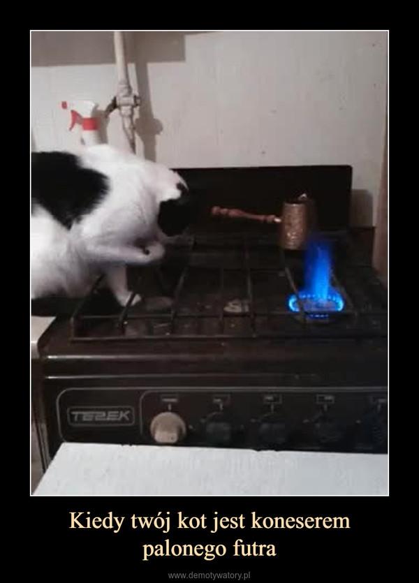Kiedy twój kot jest koneserempalonego futra –