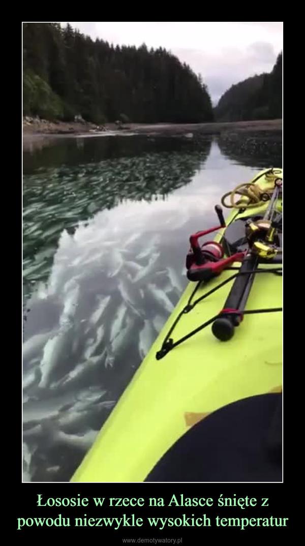 Łososie w rzece na Alasce śnięte z powodu niezwykle wysokich temperatur –