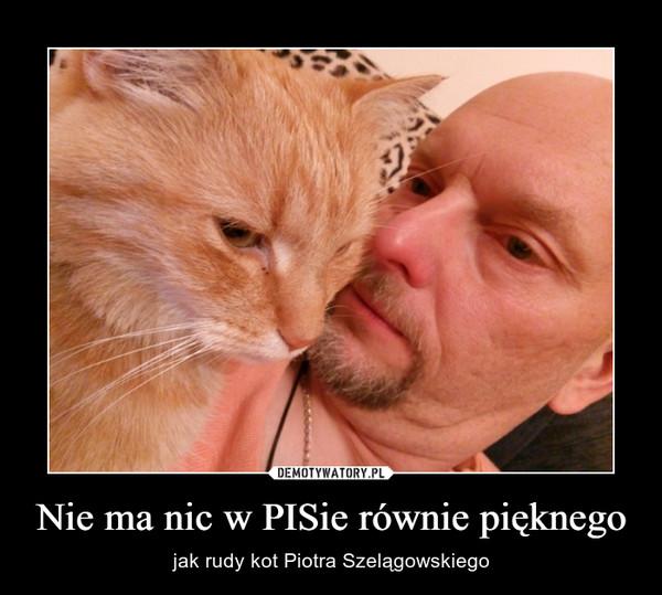 Nie ma nic w PISie równie pięknego – jak rudy kot Piotra Szelągowskiego
