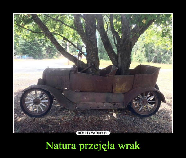 Natura przejęła wrak –