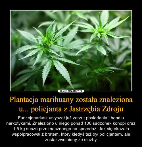 Plantacja marihuany została znaleziona u... policjanta z Jastrzębia Zdroju