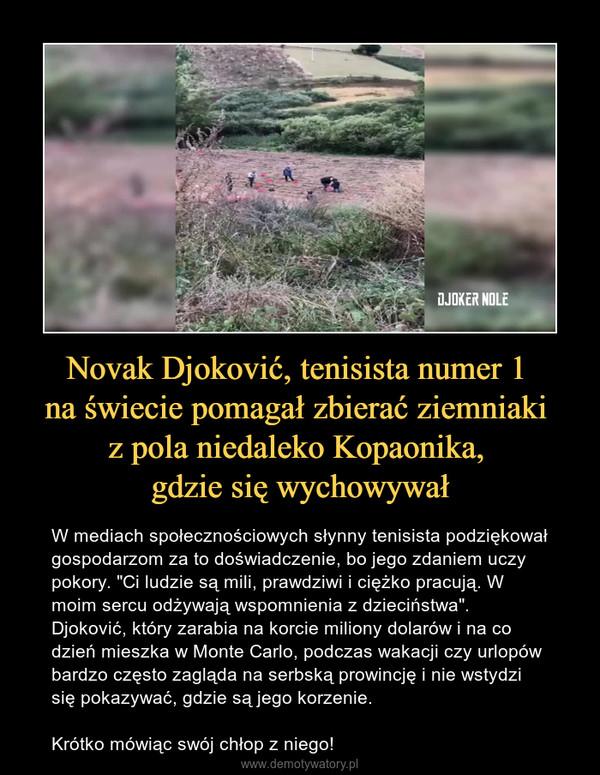 """Novak Djoković, tenisista numer 1 na świecie pomagał zbierać ziemniaki z pola niedaleko Kopaonika, gdzie się wychowywał – W mediach społecznościowych słynny tenisista podziękował gospodarzom za to doświadczenie, bo jego zdaniem uczy pokory. """"Ci ludzie są mili, prawdziwi i ciężko pracują. W moim sercu odżywają wspomnienia z dzieciństwa"""".  Djoković, który zarabia na korcie miliony dolarów i na co dzień mieszka w Monte Carlo, podczas wakacji czy urlopów bardzo często zagląda na serbską prowincję i nie wstydzi się pokazywać, gdzie są jego korzenie.Krótko mówiąc swój chłop z niego!"""