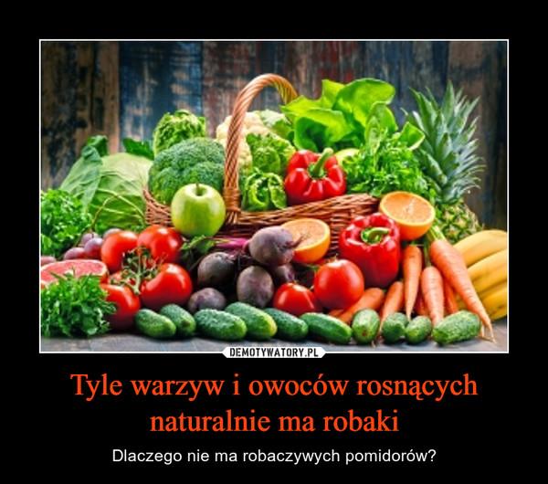 Tyle warzyw i owoców rosnących naturalnie ma robaki – Dlaczego nie ma robaczywych pomidorów?