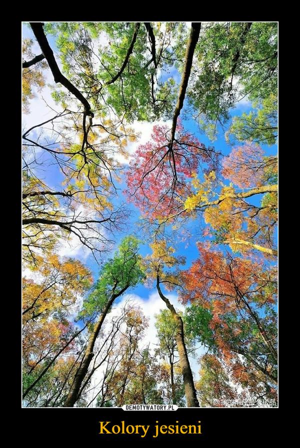 Kolory jesieni –
