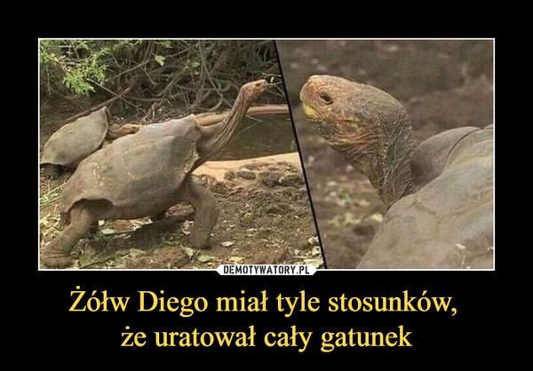 Żółw Diego miał tyle stosunków, że uratował cały gatunek –