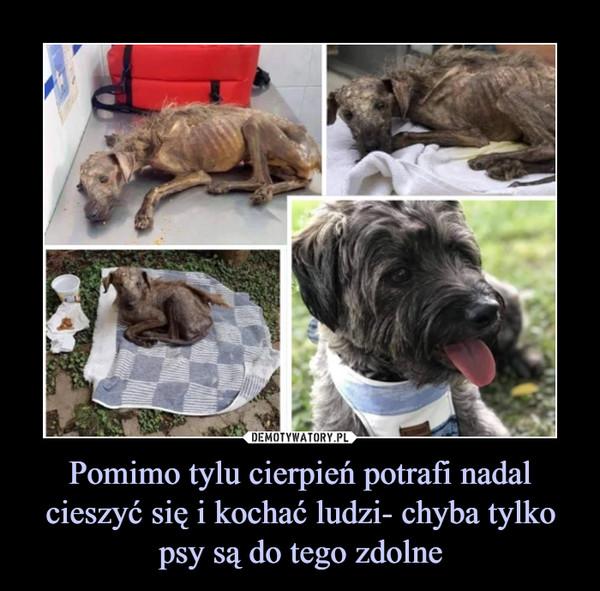 Pomimo tylu cierpień potrafi nadal cieszyć się i kochać ludzi- chyba tylko psy są do tego zdolne –
