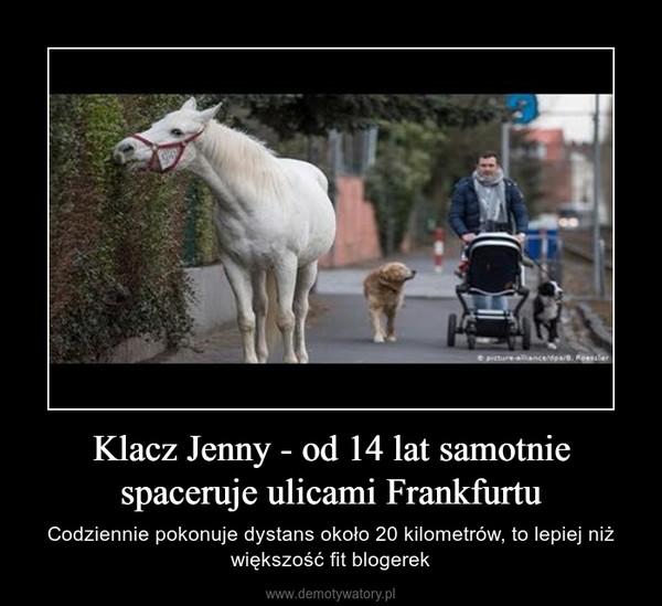 Klacz Jenny - od 14 lat samotnie spaceruje ulicami Frankfurtu – Codziennie pokonuje dystans około 20 kilometrów, to lepiej niż większość fit blogerek