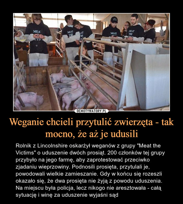 """Weganie chcieli przytulić zwierzęta - tak mocno, że aż je udusili – Rolnik z Lincolnshire oskarżył weganów z grupy """"Meat the Victims"""" o uduszenie dwóch prosiąt. 200 członków tej grupy przybyło na jego farmę, aby zaprotestować przeciwko zjadaniu wieprzowiny. Podnosili prosięta, przytulali je, powodowali wielkie zamieszanie. Gdy w końcu się rozeszli okazało się, że dwa prosięta nie żyją z powodu uduszenia. Na miejscu była policja, lecz nikogo nie aresztowała - całą sytuację i winę za uduszenie wyjaśni sąd"""