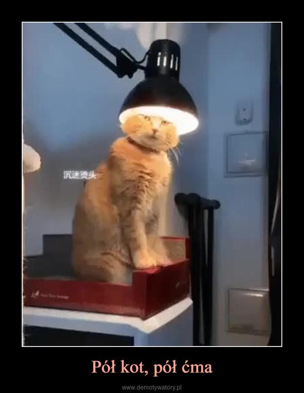 Pół kot, pół ćma –