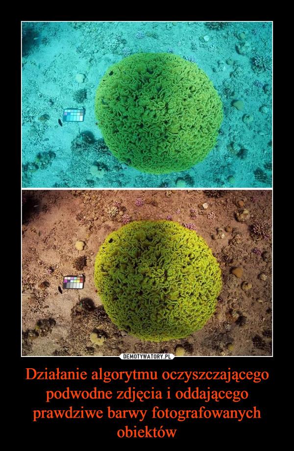 Działanie algorytmu oczyszczającego podwodne zdjęcia i oddającego prawdziwe barwy fotografowanych obiektów –