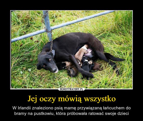 Jej oczy mówią wszystko – W Irlandii znaleziono psią mamę przywiązaną łańcuchem do bramy na pustkowiu, która próbowała ratować swoje dzieci