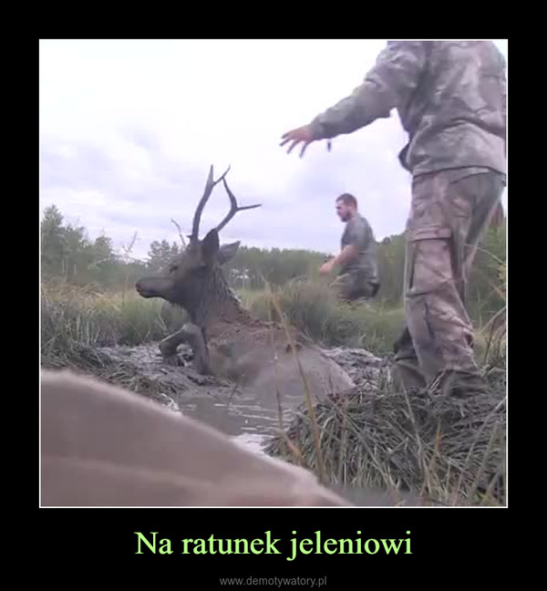 Na ratunek jeleniowi –
