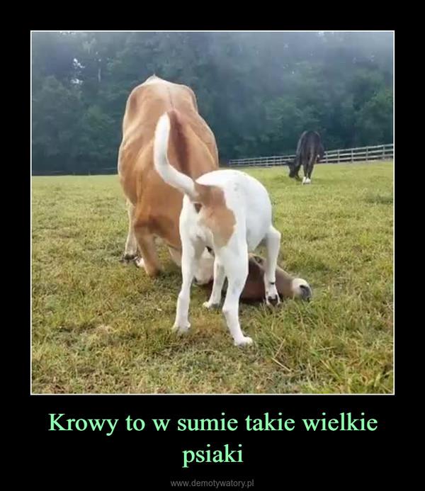 Krowy to w sumie takie wielkie psiaki –