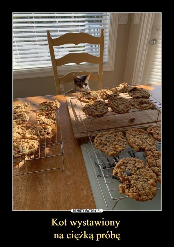 Kot wystawiony na ciężką próbę –
