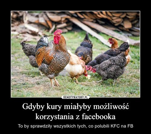 Gdyby kury miałyby możliwość korzystania z facebooka