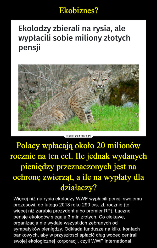 Polacy wpłacają około 20 milionów rocznie na ten cel. Ile jednak wydanych pieniędzy przeznaczonych jest na ochronę zwierząt, a ile na wypłaty dla działaczy? – Więcej niż na rysia ekolodzy WWF wypłacili pensji swojemu prezesowi, do lutego 2018 roku 290 tys. zł. rocznie (to więcej niż zarabia prezydent albo premier RP). Łączne pensje ekologów sięgają 3 mln złotych. Co ciekawe, organizacja nie wydaje wszystkich zebranych od sympatyków pieniędzy. Odkłada fundusze na kilku kontach bankowych, aby w przyszłosci spłacić dług wobec centrali swojej ekologicznej korporacji, czyli WWF International.