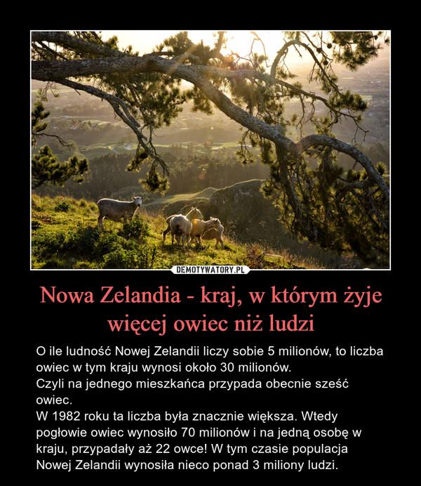 Nowa Zelandia - kraj, w którym żyje więcej owiec niż ludzi – O ile ludność Nowej Zelandii liczy sobie 5 milionów, to liczba owiec w tym kraju wynosi około 30 milionów. Czyli na jednego mieszkańca przypada obecnie sześć owiec. W 1982 roku ta liczba była znacznie większa. Wtedy pogłowie owiec wynosiło 70 milionów i na jedną osobę w kraju, przypadały aż 22 owce! W tym czasie populacja Nowej Zelandii wynosiła nieco ponad 3 miliony ludzi.