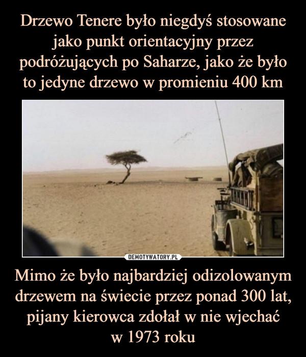 Mimo że było najbardziej odizolowanym drzewem na świecie przez ponad 300 lat, pijany kierowca zdołał w nie wjechaćw 1973 roku –