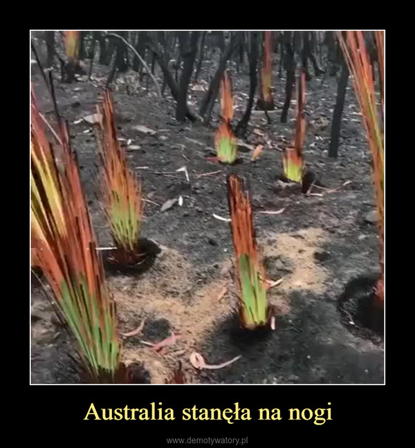 Australia stanęła na nogi –