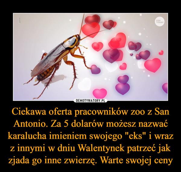 """Ciekawa oferta pracowników zoo z San Antonio. Za 5 dolarów możesz nazwać karalucha imieniem swojego """"eks"""" i wraz z innymi w dniu Walentynek patrzeć jak zjada go inne zwierzę. Warte swojej ceny –"""
