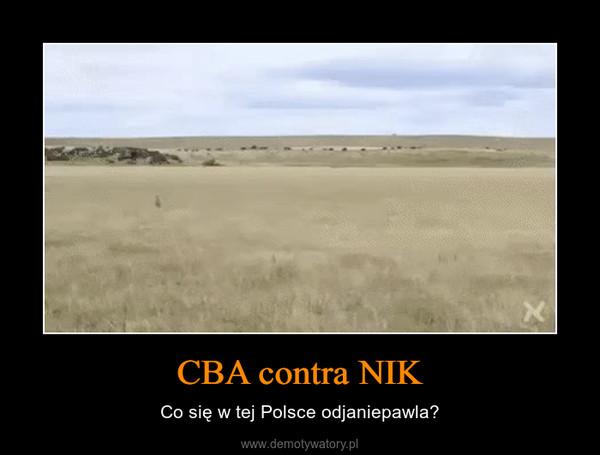 CBA contra NIK – Co się w tej Polsce odjaniepawla?
