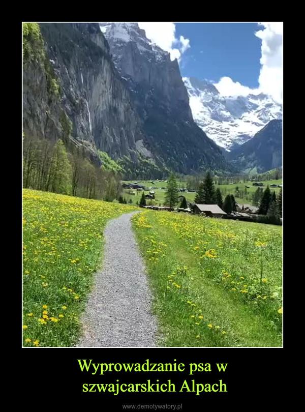 Wyprowadzanie psa w szwajcarskich Alpach –