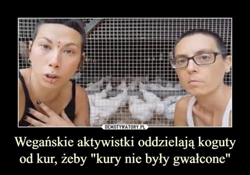 """Wegańskie aktywistki oddzielają koguty od kur, żeby """"kury nie były gwałcone"""""""