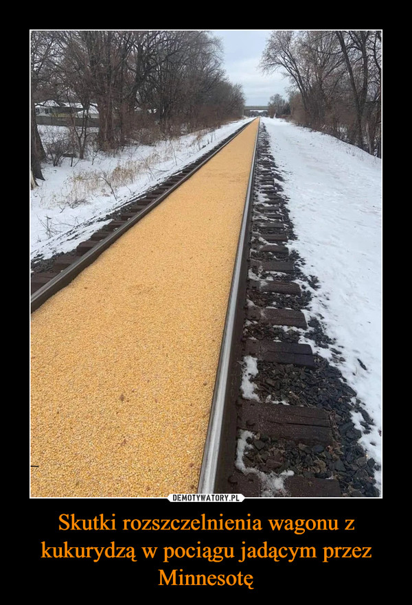 Skutki rozszczelnienia wagonu z kukurydzą w pociągu jadącym przez Minnesotę –